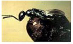 fly eliminator