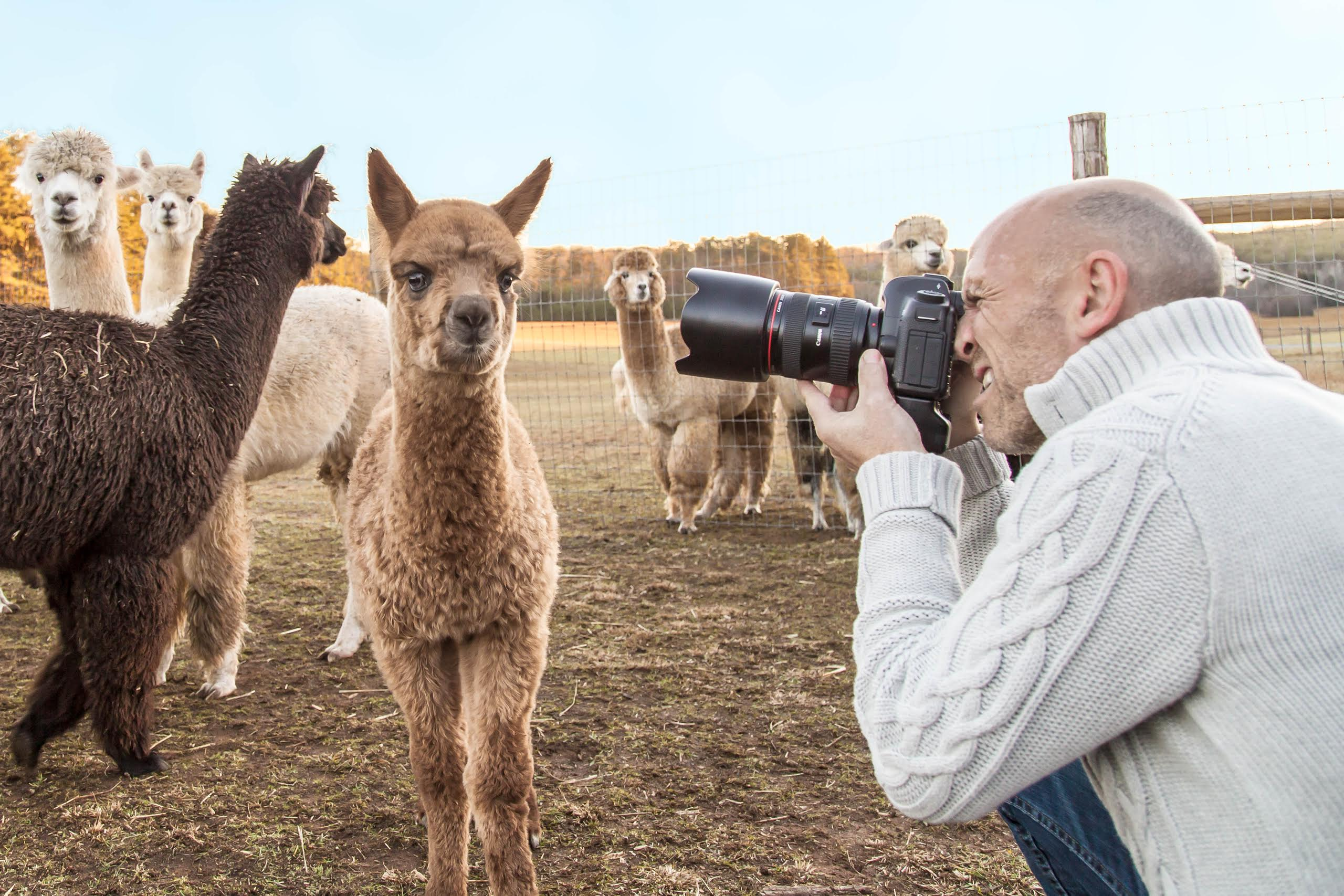 Photographing a young cria